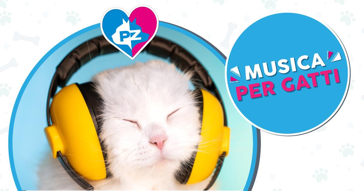 La musica per gatto esiste davvero e gli amici felici la amano da impazzire