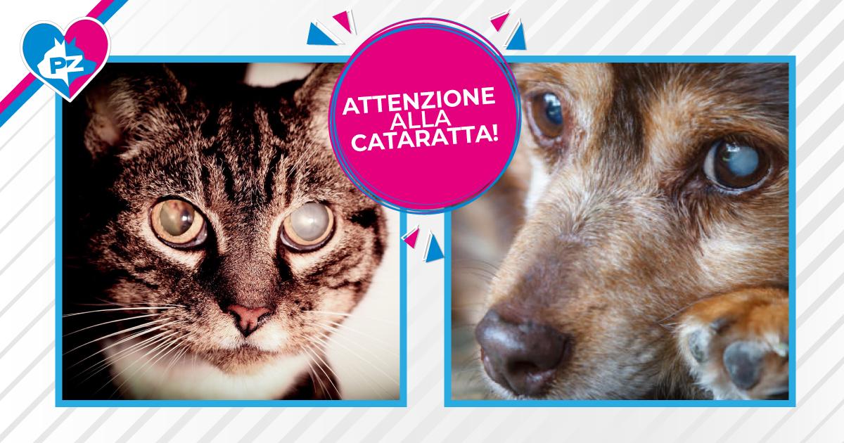 Cani e gatti: attenzione al pericolo cataratta