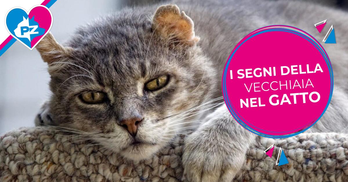 Invecchiamento dei gatti: ecco alcuni segnali