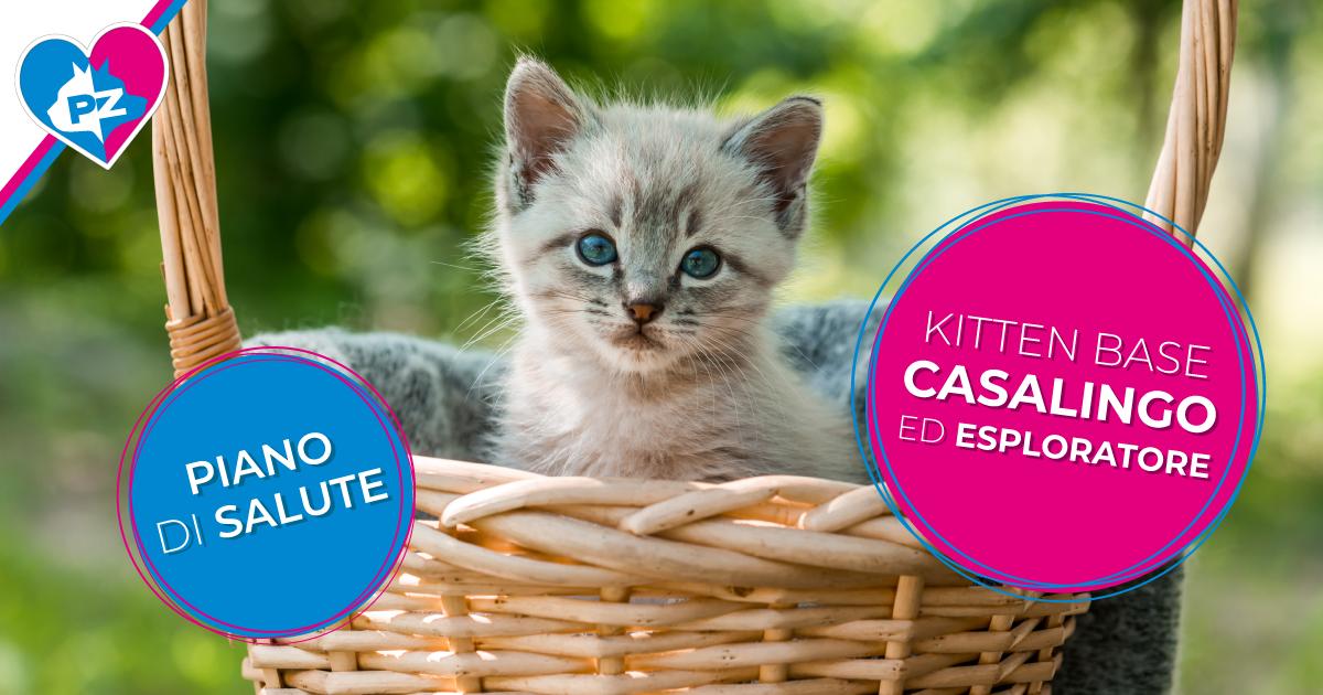 Kitten base Casalingo ed Esploratore