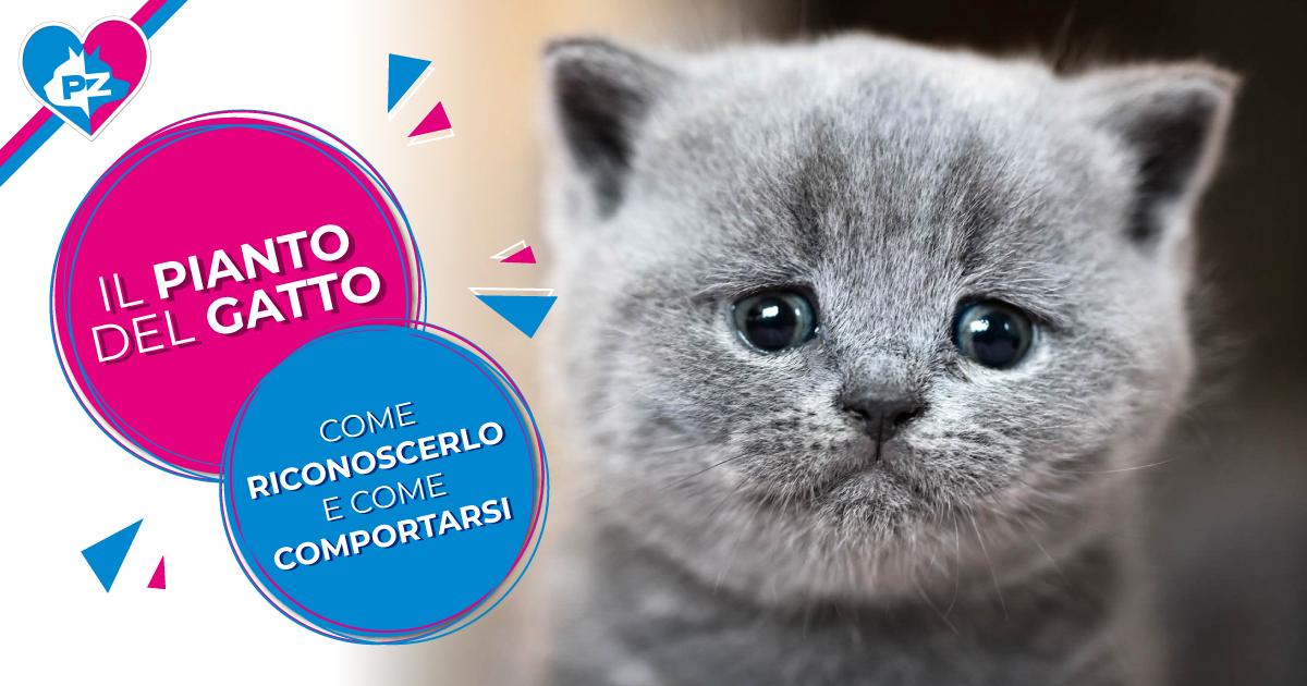 Il pianto del gatto: come riconoscerlo e come comportarsi